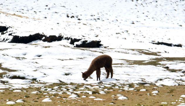 Senamhi: temperatura mínima en Sierra sur registrará hasta 18 grados bajo cero