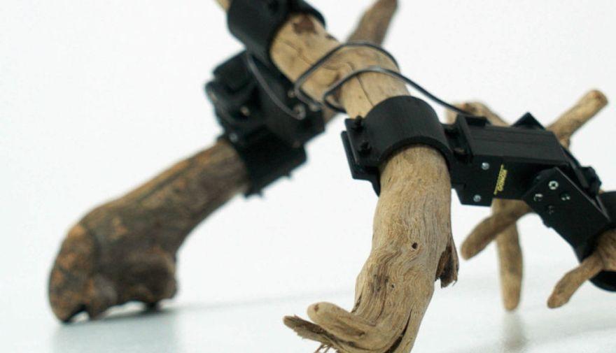 El robot hecho de ramas que es capaz de aprender a moverse por sí mismo | VIDEO