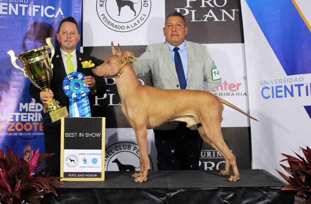 Perro Peruano sale victorioso en el 59° aniversario del Kennel Club Peruano