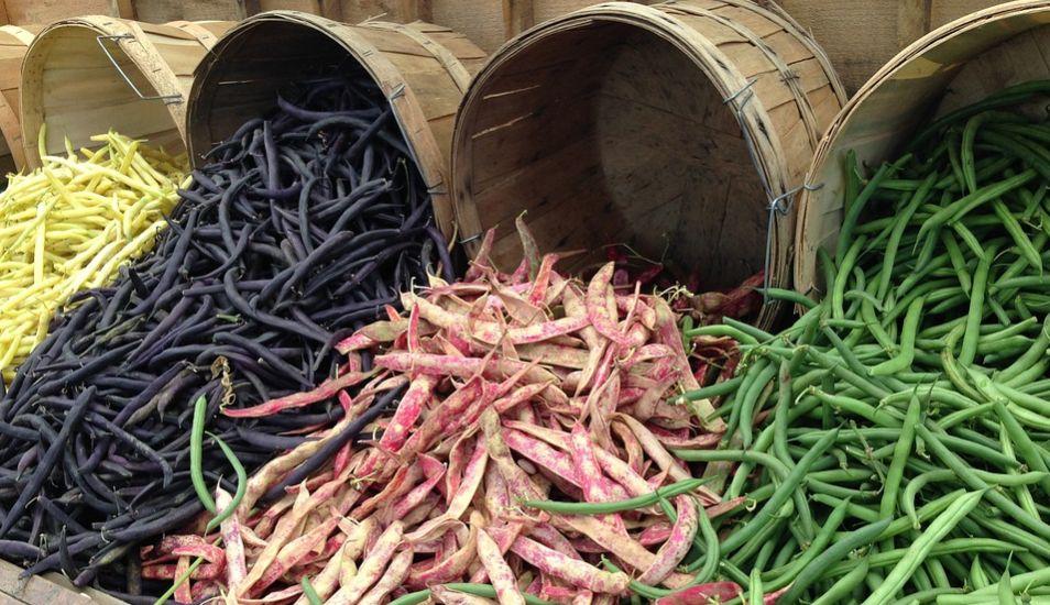 Los frejoles son ricos para disminuir la grasa elevado en el organismo. (Foto: Pixabay)