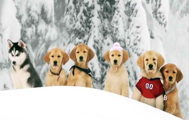 'Snow Buddies': la película de Disney que mató a 5 cachorros