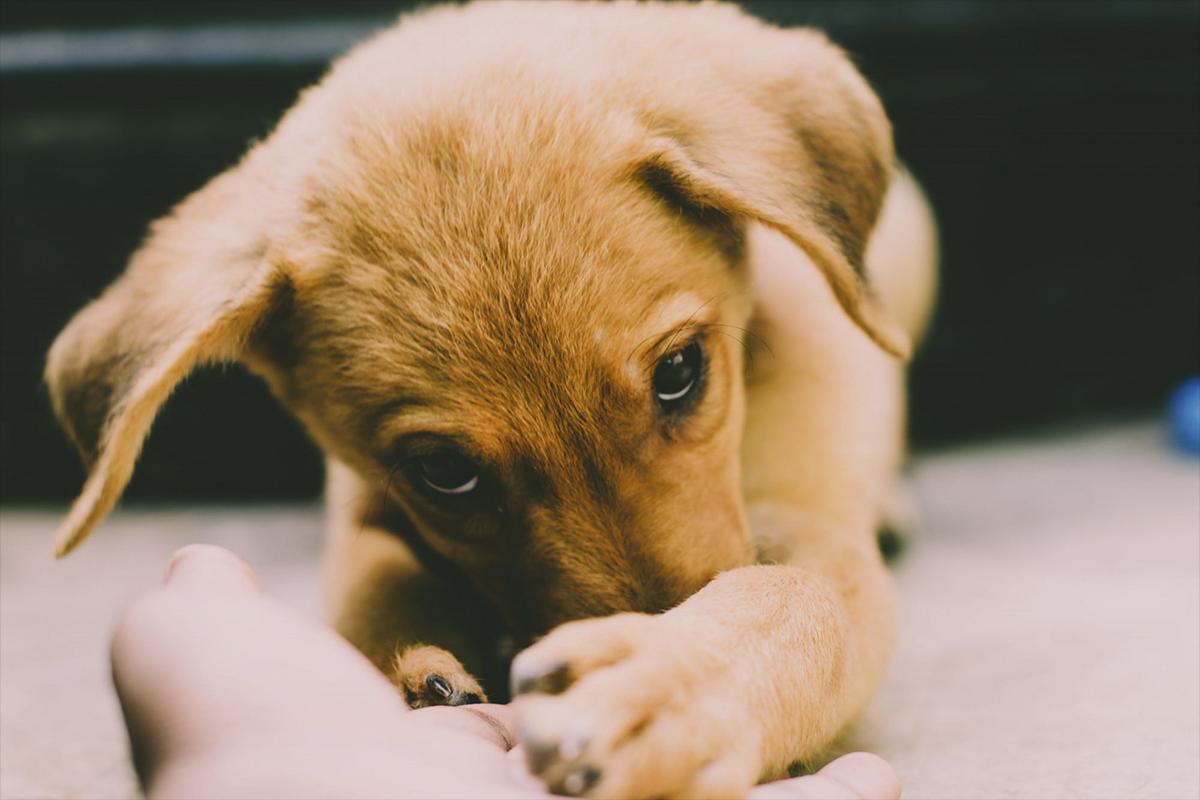 Facebook viral: El nacimiento de un perro de color verde en EE.UU. causa revuelo en todo el Internet