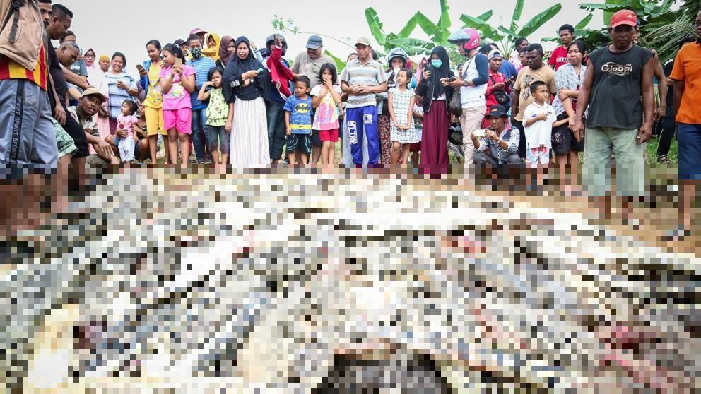 Una multitud enfurecida masacra a 300 cocodrilos