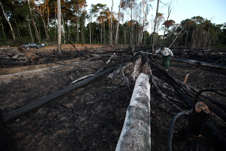 EE.UU. tomaría medidas contra Perú por tala de árboles en la Amazonía | FOTOS
