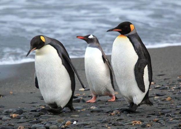Científicos hallan restos de pingüino gigante en Antártida