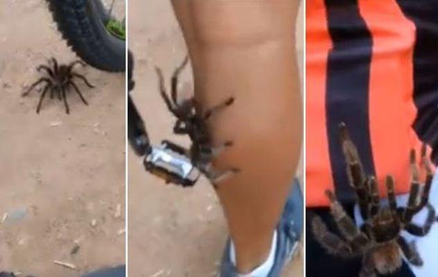 ¡De terror! Tarántula se sube a la pierna de ciclista y genera pánico [VIDEO]