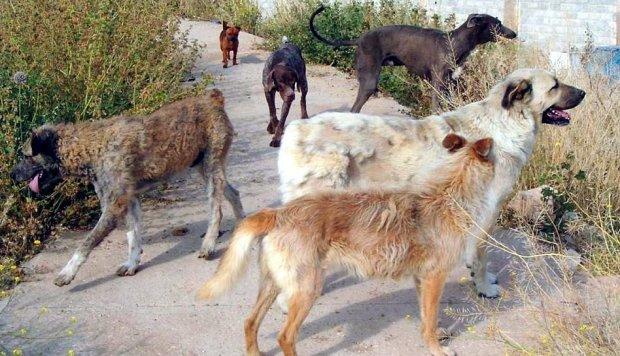 Denunciada famosa ONG animalista surcoreana por supuesto sacrificio de perros